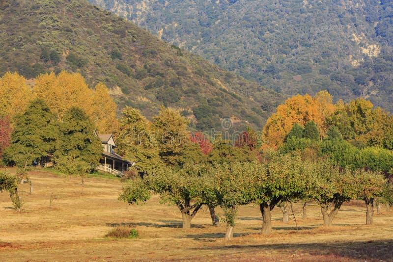 Cor bonita da queda sobre a área do vale do carvalho fotografia de stock royalty free