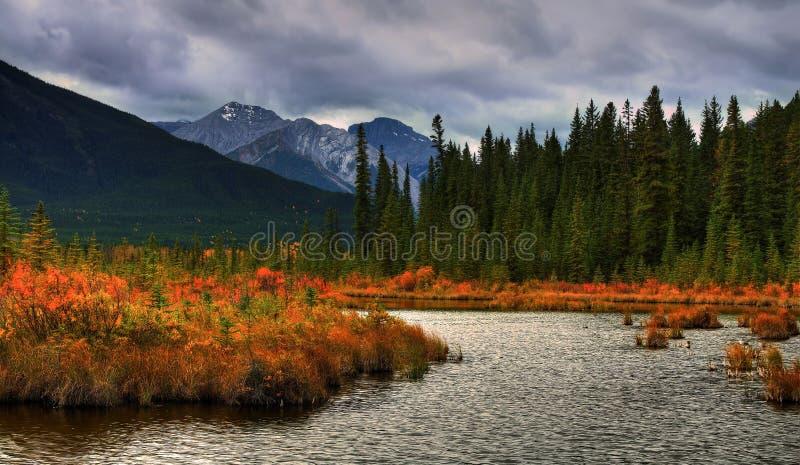 Cor bonita do outono foto de stock
