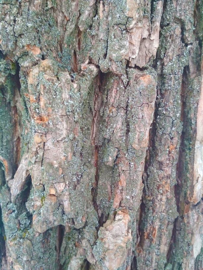 Cor cinzenta da textura de madeira brilhante natural foto de stock