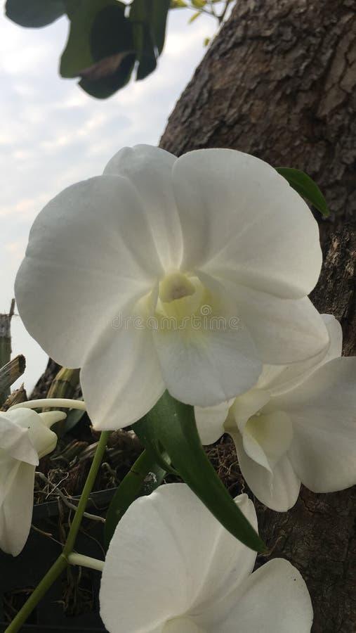 Cor clara da orquídea foto de stock royalty free
