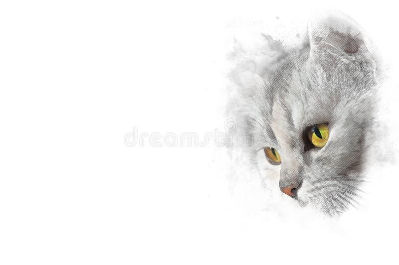 Cor com olhos alaranjados, desenho do gato de lápis estilizado isolado no branco fotos de stock royalty free