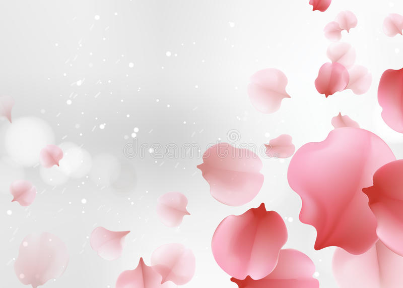 A cor cor-de-rosa macia elegante sakura floresce o fundo ilustração royalty free