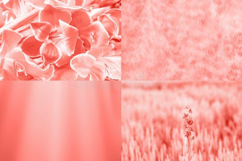 Cor coral viva na moda Colagem, flores e texturas criativas imagens de stock