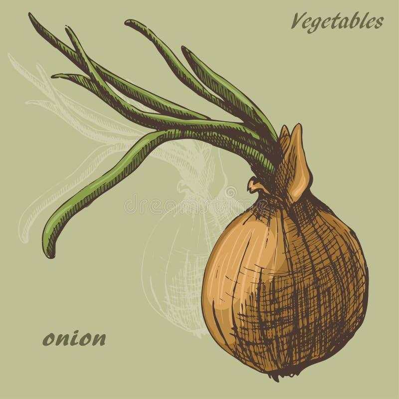 Cor da cebola ilustração do vetor