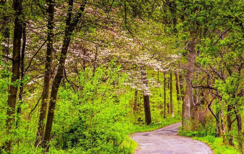 Cor da mola ao longo de uma estrada através de uma floresta no Condado de Lancaster C fotos de stock
