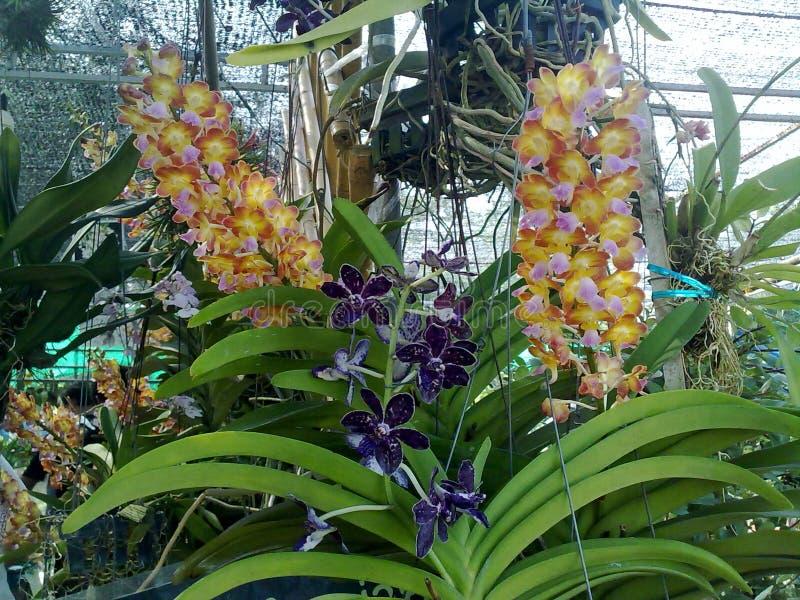 Cor da orquídea imagem de stock