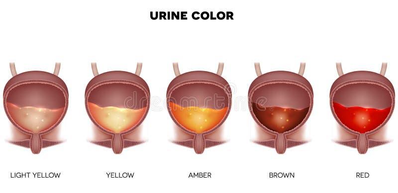Cor da urina ilustração royalty free