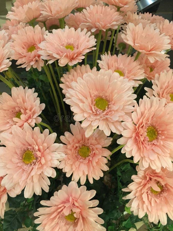 Cor-de-rosa foto de stock