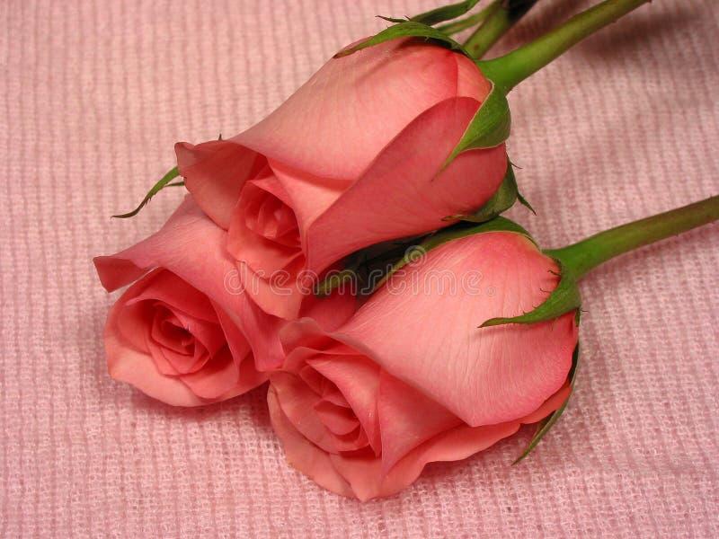 Cor-de-rosa de bebê 1 fotos de stock royalty free