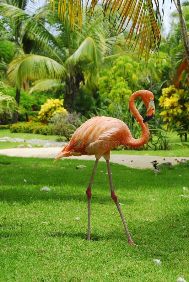 Cor-de-rosa do flamingo vista no perfil foto de stock