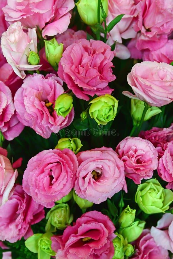 Cor-de-rosa e claro bonitos - rosas verdes foto de stock