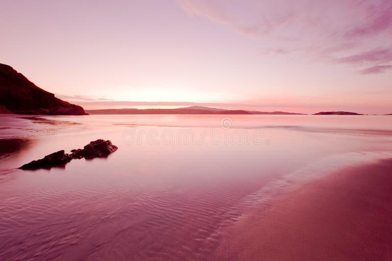A cor-de-rosa e molhou foto de stock royalty free