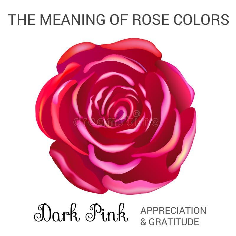 A cor-de-rosa escura levantou-se ilustração do vetor
