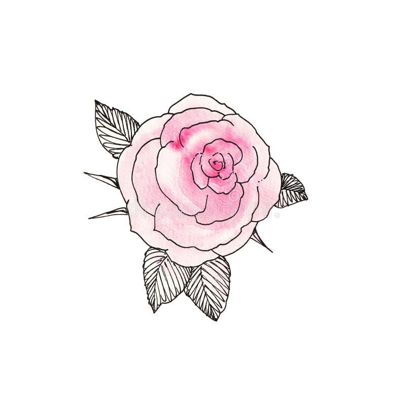 A cor-de-rosa levantou-se 2 imagem de stock royalty free