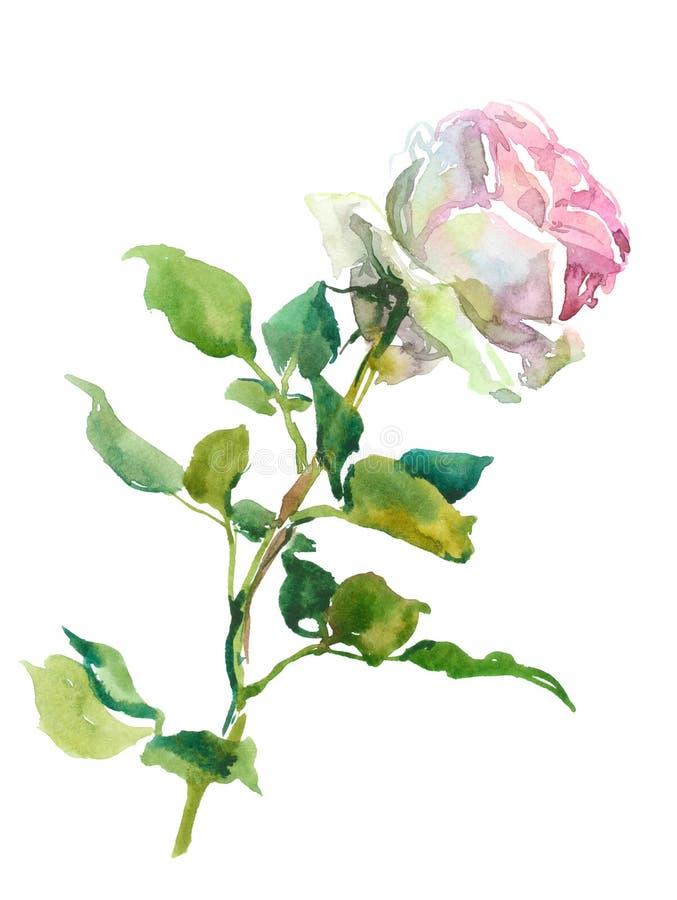 A cor-de-rosa levantou-se ilustração royalty free