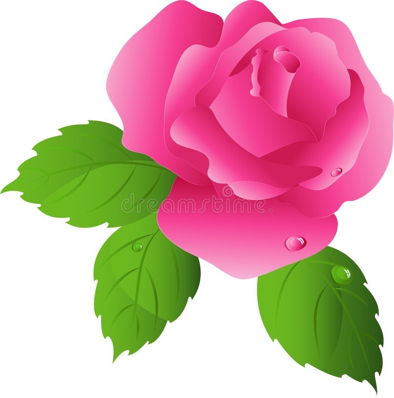 A cor-de-rosa levantou-se ilustração stock