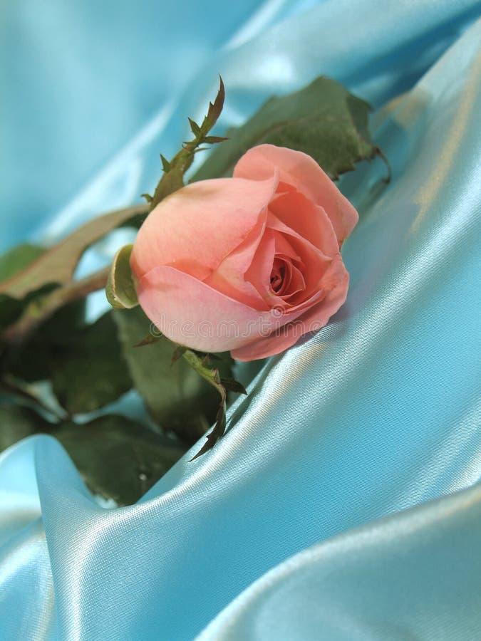 A cor-de-rosa levantou-se no cetim azul fotos de stock