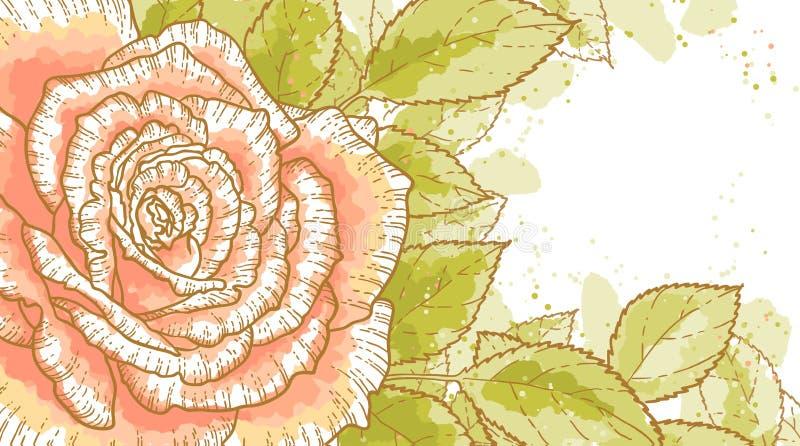 A cor-de-rosa levantou-se no fundo branco ilustração stock