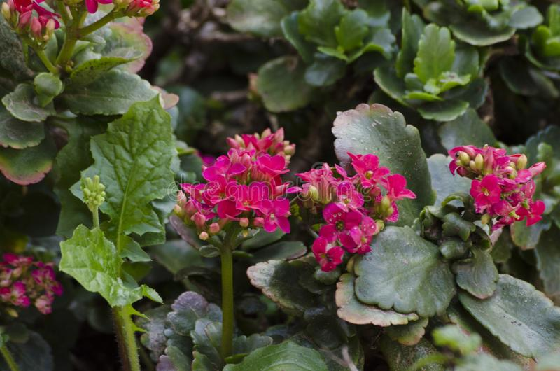A cor-de-rosa pequena floresce o fundo fotos de stock