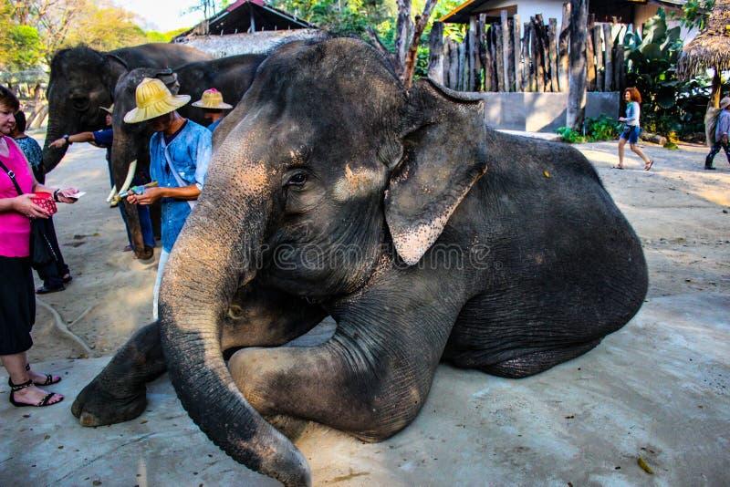 A cor de Tailândia foto de stock
