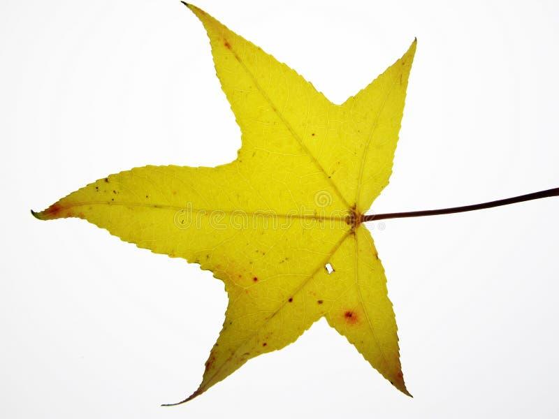 Download Cor do outono foto de stock. Imagem de mudança, alaranjado - 16851126