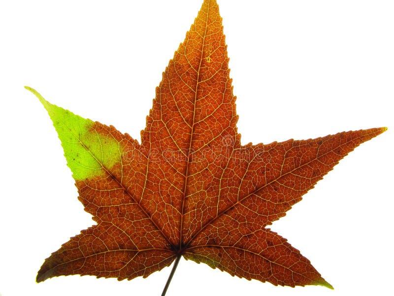 Download Cor do outono foto de stock. Imagem de elemento, planta - 16851146