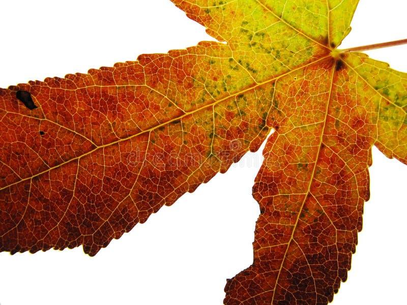 Download Cor do outono imagem de stock. Imagem de closeup, textura - 16851235