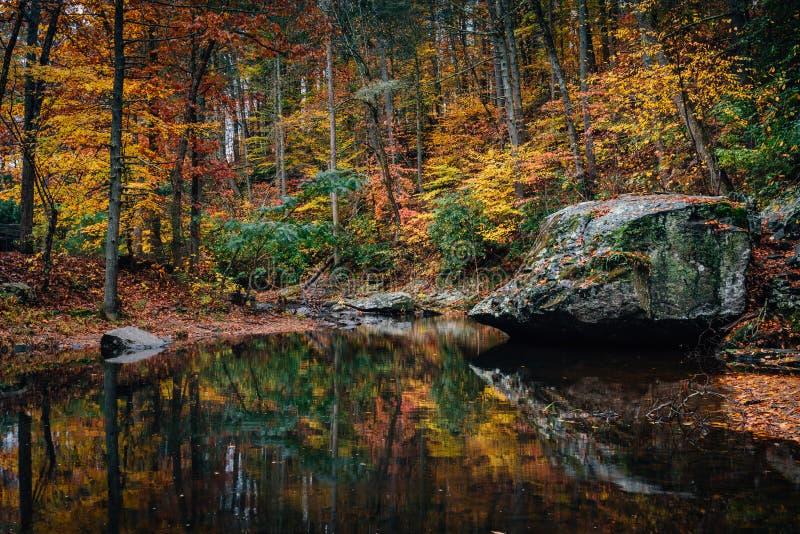 Cor do outono na angra da lontra, em Ridge Parkway azul em Virgínia imagens de stock royalty free