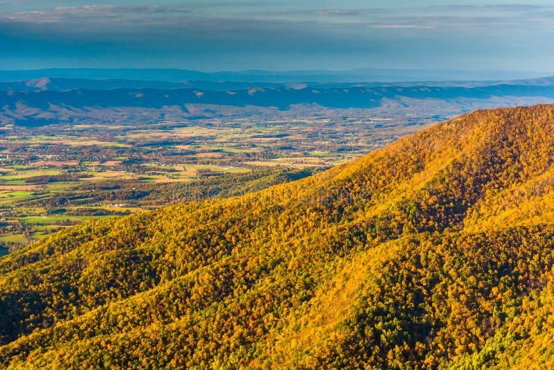 Cor do outono vista da montanha de Hawksbill, em Shenandoah Nationa fotografia de stock royalty free