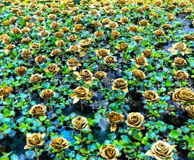 A cor dourada aumentou na folha verde no fundo da associação fotografia de stock
