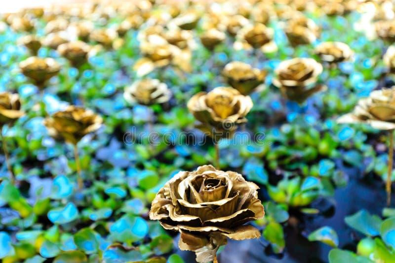 A cor dourada aumentou na folha verde no fundo da associação fotos de stock