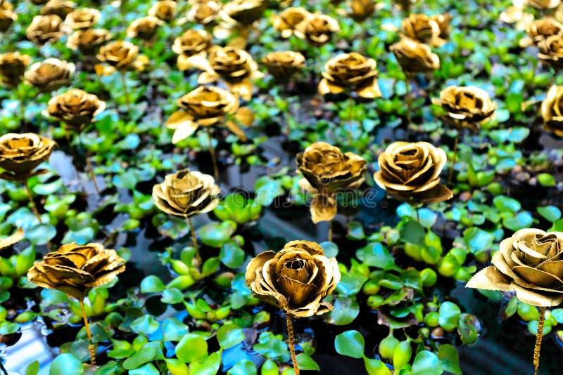 A cor dourada aumentou na folha verde no fundo da associação fotos de stock royalty free