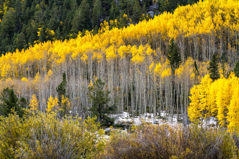 Cor e neve da queda em Colorado foto de stock royalty free