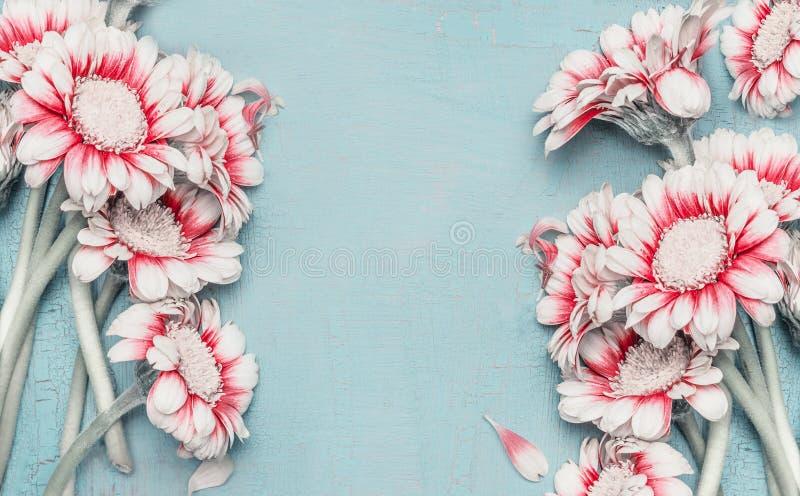 A cor pastel bonita floresce o quadro com as margaridas no fundo chique gasto do azul de turquesa, vista superior, beira Disposiç fotografia de stock royalty free