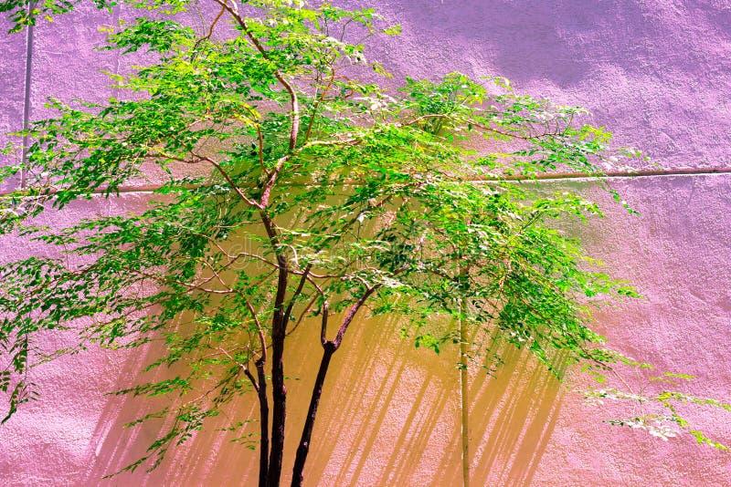 Cor pastel verde do isolado da árvore do vintage ao teste padrão criativo fotos de stock royalty free
