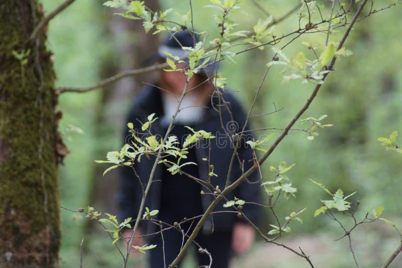 Cor verde na floresta fotos de stock