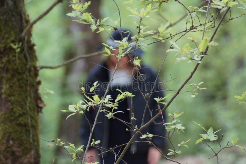 Cor verde na floresta fotografia de stock royalty free