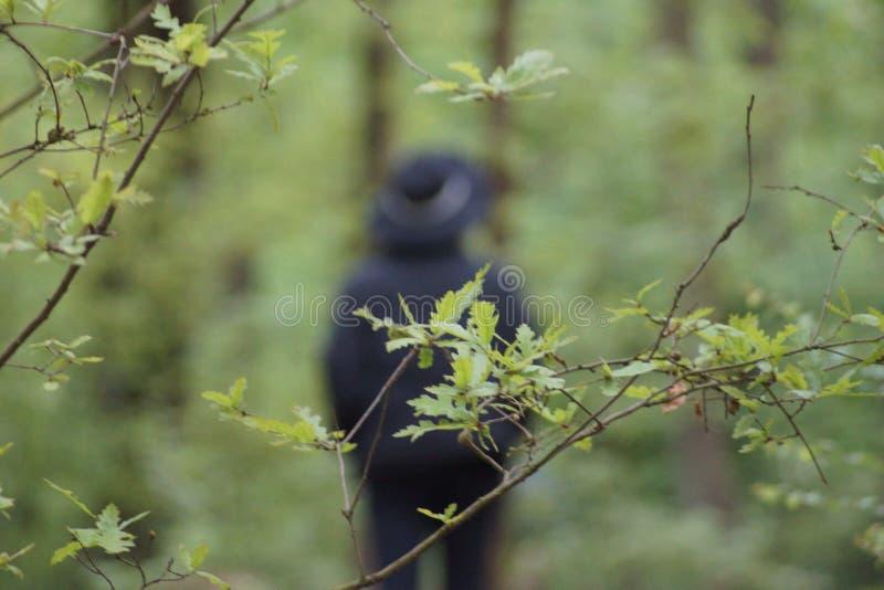 Cor verde na floresta imagens de stock
