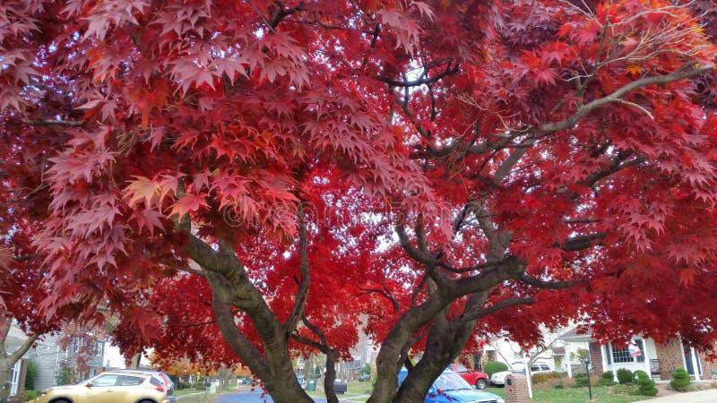A cor vibrante da queda indicou I esta árvore foto de stock