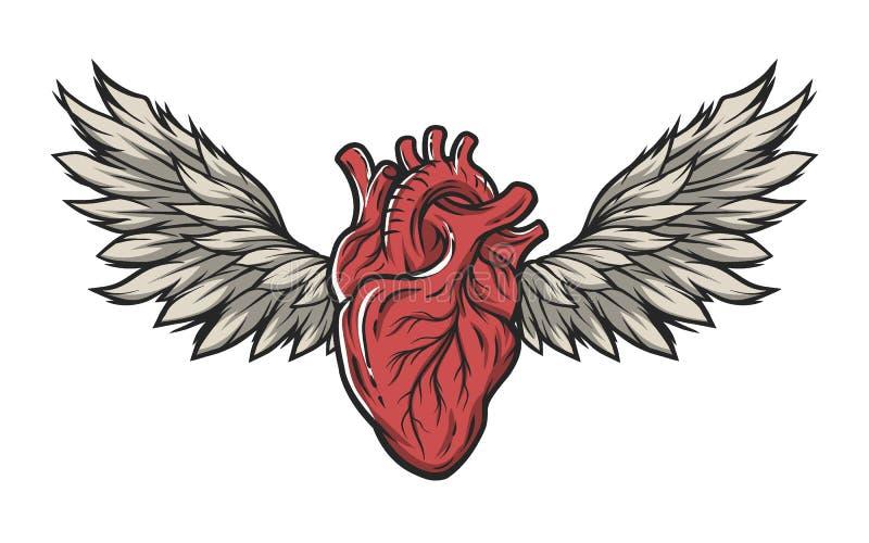 Coração anatômico com asas ilustração stock