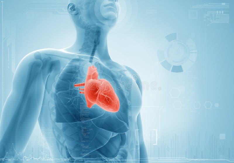 Coração; conceito do raio X ilustração do vetor