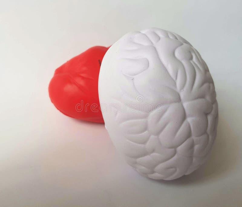 Coração contra o cérebro imagem de stock royalty free