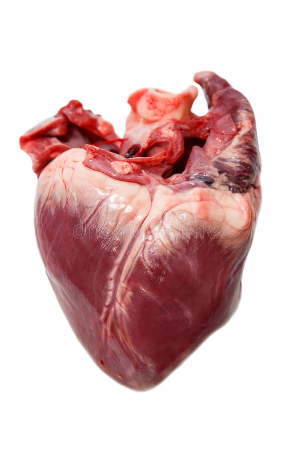 Coração cru da carne de porco fotografia de stock