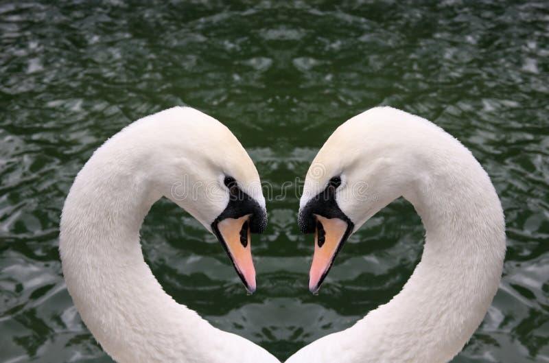 Coração da cisne imagem de stock
