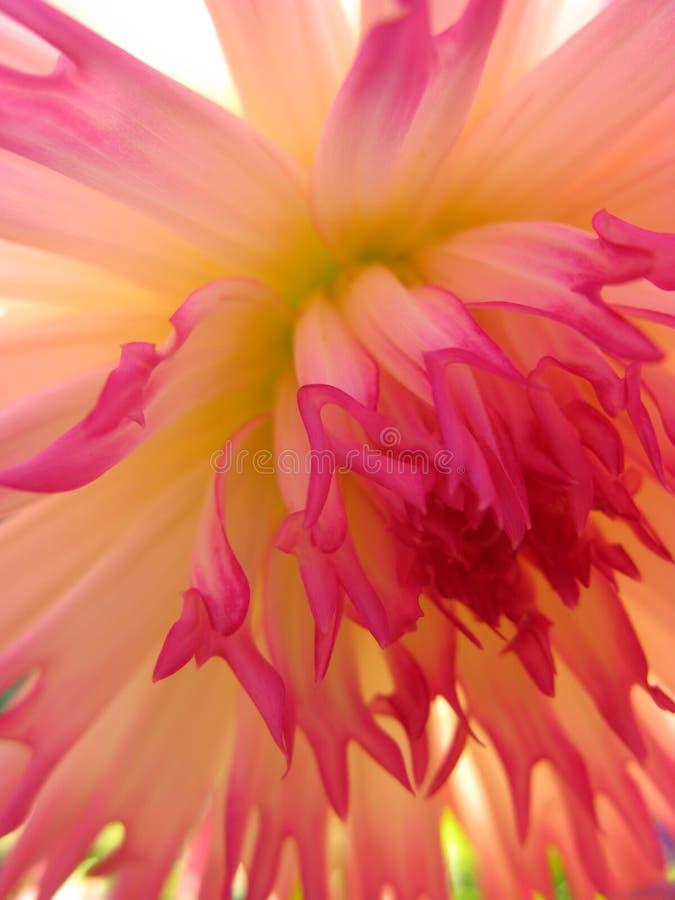 Coração da flor imagens de stock royalty free