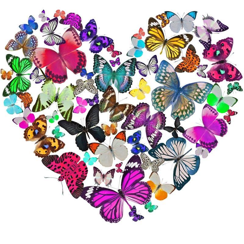 Coração das borboletas ilustração stock