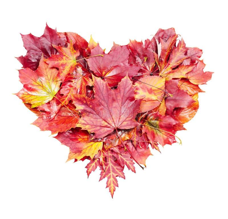 Coração das folhas de outono imagens de stock royalty free