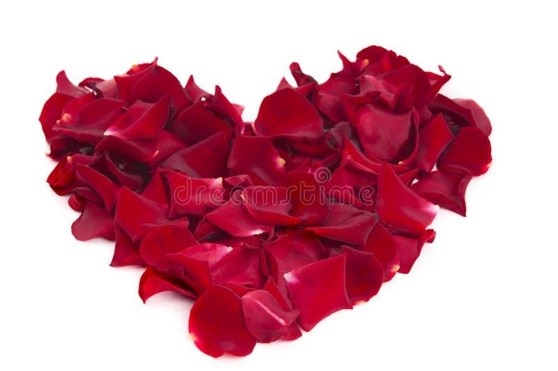 Coração das pétalas cor-de-rosa foto de stock