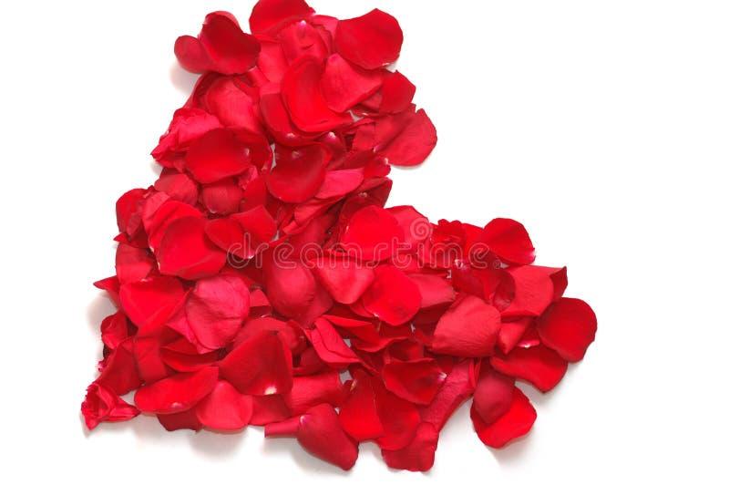 Coração das pétalas de rosas vermelhas fotografia de stock