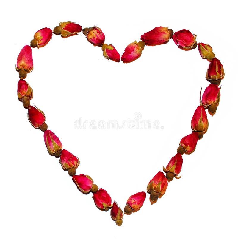 Coração das rosas de chá isolado no branco imagem de stock